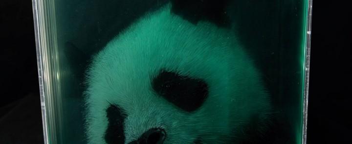 Ylirealistisia maalauksia eläinten irtileikatuista päistä