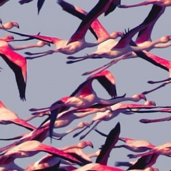Kalenterimuistutus: Deftonesilta kahdeksas albumi huhtikuussa